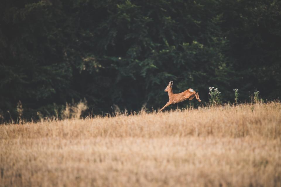 Streizüge durch die Natur